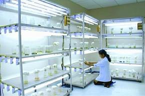 Regional Ayurveda Institute for Fundamental Research - [RAIFR], Pune